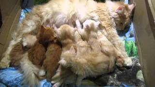 Kittens sleeping with mom.