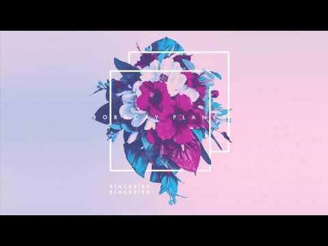 Blackbird Blackbird - Keep It Up (Distal Remix)