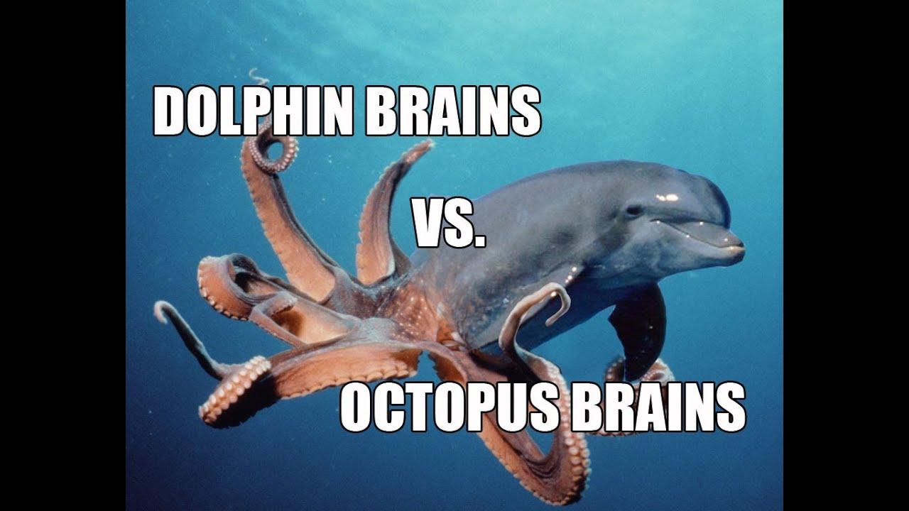 ask joe  18 - dolphin vs  octopus