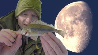 Во всЁм виновата она, Луна! Зимняя рыбалка 2019!