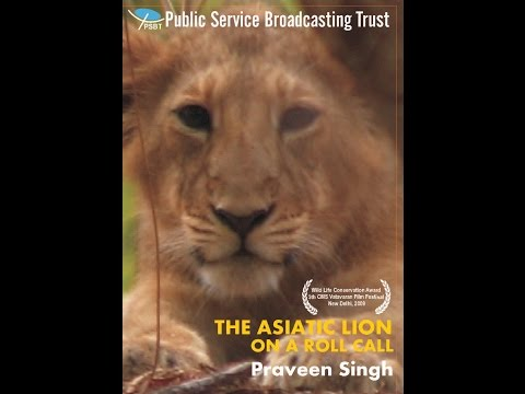 THE ASIATIC LIONS – ON A ROLL CALL