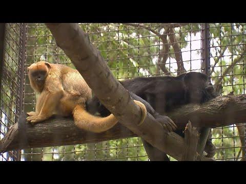 Primatas Vítimas De Maus Tratos
