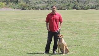 Newfoundland Dog Behavior : Dog Behavior & Training