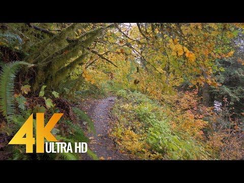 Autumn Forest Walk in 4K  25 HRS Nature  with Nature Sounds and Birds Signing