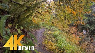 The forest in autumn is always special and bright! there are still lots of birds that please us with their songs! take a look at new 4k virtual walk along ...