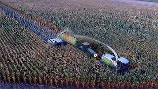 Wielkie koszenie 60 hektarów kukurydzy na 2 sieczkarnie- Claas Jaguar, John Deere 5X, Joskin