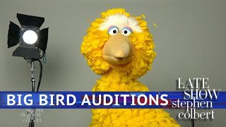 Who Will Be The Next Big Bird?