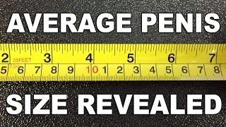 Average Penis Size Revealed - The Know
