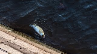 Рыбалка в центре Москвы.