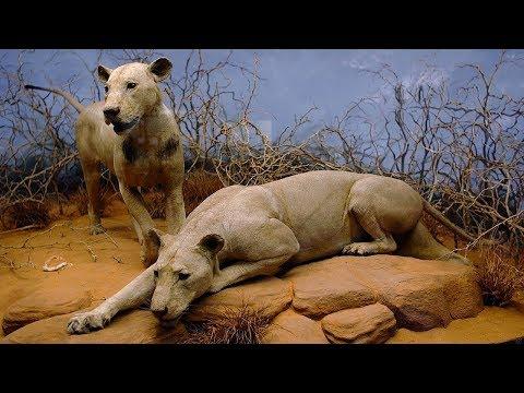 видеоприкол животные людоеды
