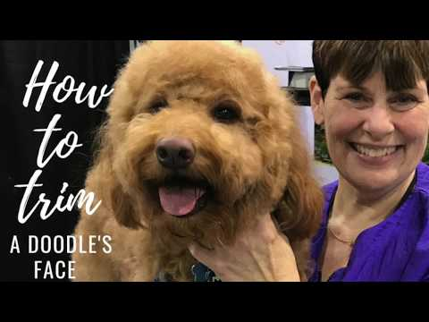 How to trim a goldendoodle's face