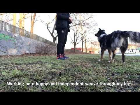 Freestyle basics weave and back up