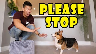 Acting Scared of My CORGI Dog - His Reaction || Life After College: Ep. 703