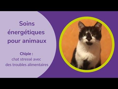 Soins énergétiques pour un chat stressé avec des problèmes alimentaires
