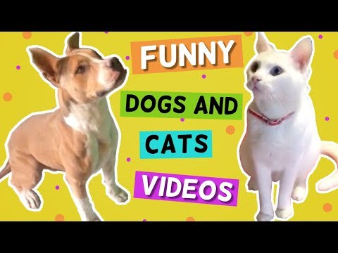 Funny Dogs and Cats Videos | Funny Pet Fail Compilations | Ooops Funniest Videos 2020