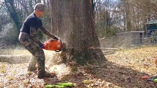 Extreme Dangerous Biggest Tree Felling ¦¦ Amazing Fastest Trees Cutting Down with Chainsaw Machine