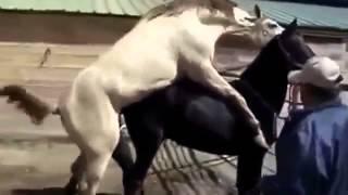 Female Doggy Horse FUNNY 41Small Cats Horses, Mating Donkeys Mating BreedingDog Dog BreedingDonkey P