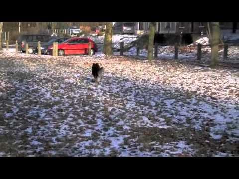 Kenji dans la neige .m4v