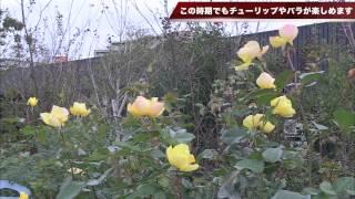 『横浜イングリッシュガーデン』では、この時期でもチューリップやバラ...
