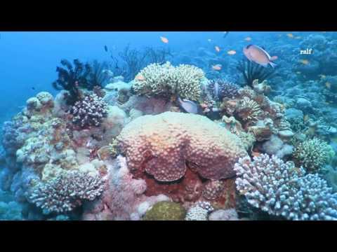 Diving in Aqaba 2016
