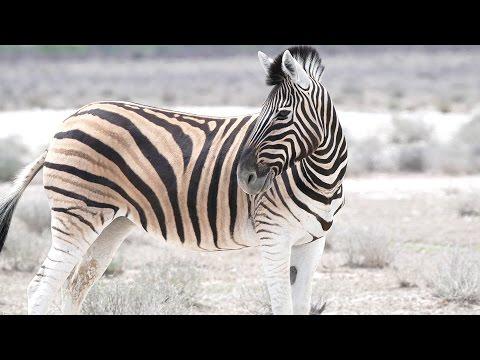 Etosha Nationalpark Namibia - Weltreise | VLOG #179