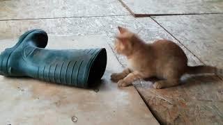Кот в сапоге. Смешной котёнок.