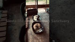 Siesta Time at Happy Tails Sanctuary