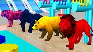 Learn Colors With Wild Animals And Soccer Ball Colors - Cartoon For Kidzee Rhymes