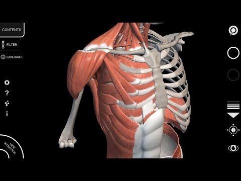 физиология и основы анатомии котов лосева скачать