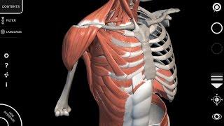 3D Atlas of Anatomy - App Muscular System - Tutorial