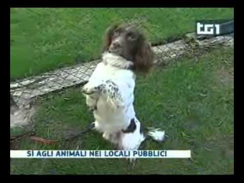 Animali domestici nei locali pubblici