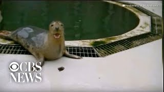 "Seals learn to sing ""Star Wars"" song and copy human sounds"