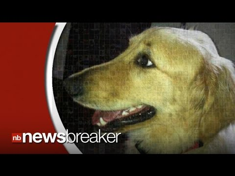 petco-changes-grooming-policies-in-wake-of-golden-retriever-death