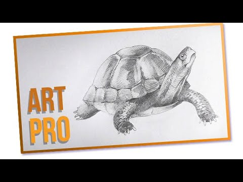 how to draw a turtle step by step youtube
