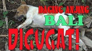 Download Video VIRAL DUNIA! Sate Daging RW Anjing Bali Digugat Pencinta Binatang Australia MP3 3GP MP4