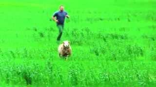 ARM: Ja kuhu, kurat kadusid lambad ja koer?