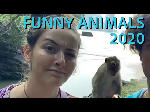 Funny Animals 2020 || Funny Videos