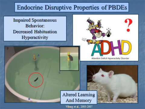 The Feline Thyroid Gland: A Model for Endocrine Disruption by PBDEs