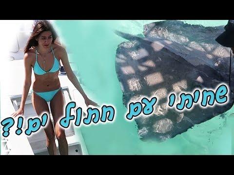 שחיתי עם חתולי ים?! המסע אל הקאריביים- חלק 4