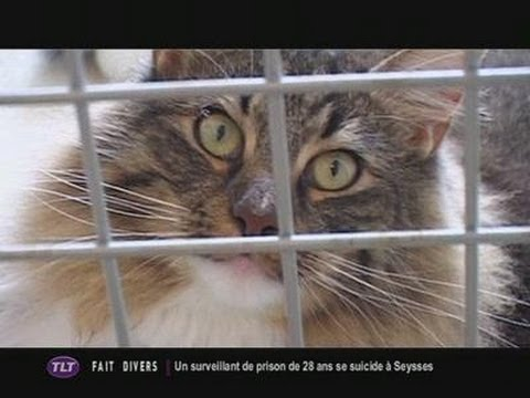 Chat Mallow, Pension Pour Chat (Toulouse)