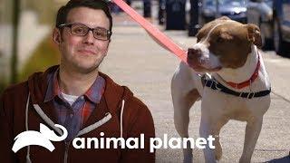 Pareja se enamora de un perro rescatado | Pit bulls y convictos | Animal Planet