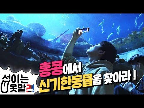 홍콩 신기한동물 (가오리,왈라비,카피바라)를 찾아라 ! with.억섭호 #Mission 1 [섭이는못말려]