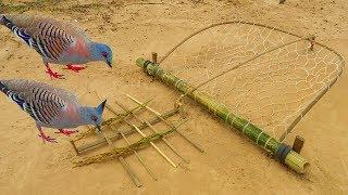 Easy Bird Trap - Simple DIY Creative Bird Trap make from Net That Work 100% By Men thumbnail