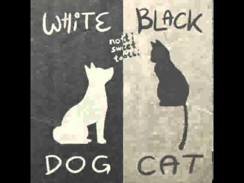 Черный пес черный кот