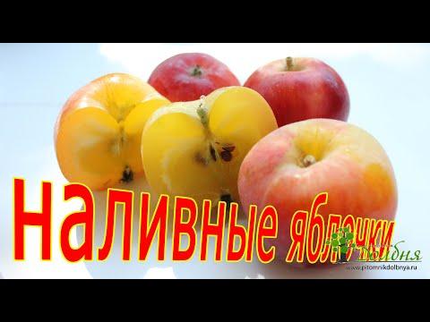 А у Вас растут наливные яблочки? Питомник Долбня.
