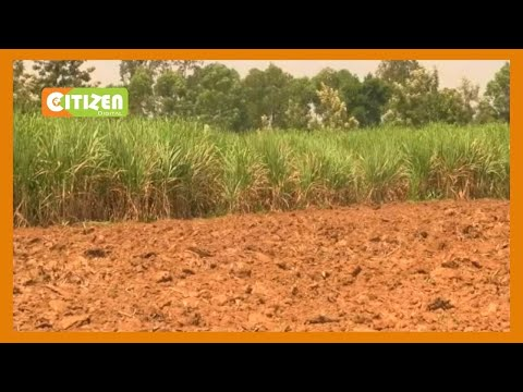 Sugarcane farmers welcome formation of committee to oversee leasing of public millers