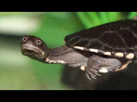 Черепаха в Киевской области - YouTube