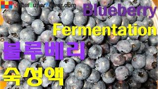 블루베리액 숙성 Blueberry Fermentatio…