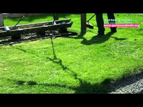 Rasen Schnitt Pflege Youtube
