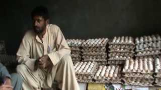 Egg collector--Smal Scale Layer Farm
